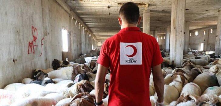Türkiye ve 21 ülkede kurban kesimleri başladı