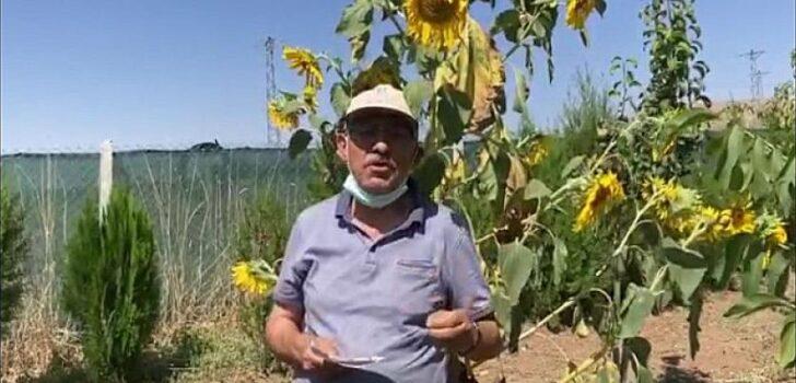 İYİ Partili Yokuş: Ayçiçeği alım fiyatı 7 lira olmalıdır