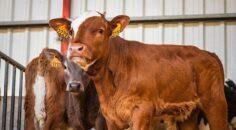 16 Ekim Dünya Gıda Günü: Hayvansal gıdaların güvenliği ve hayvan besleme ilişkisi